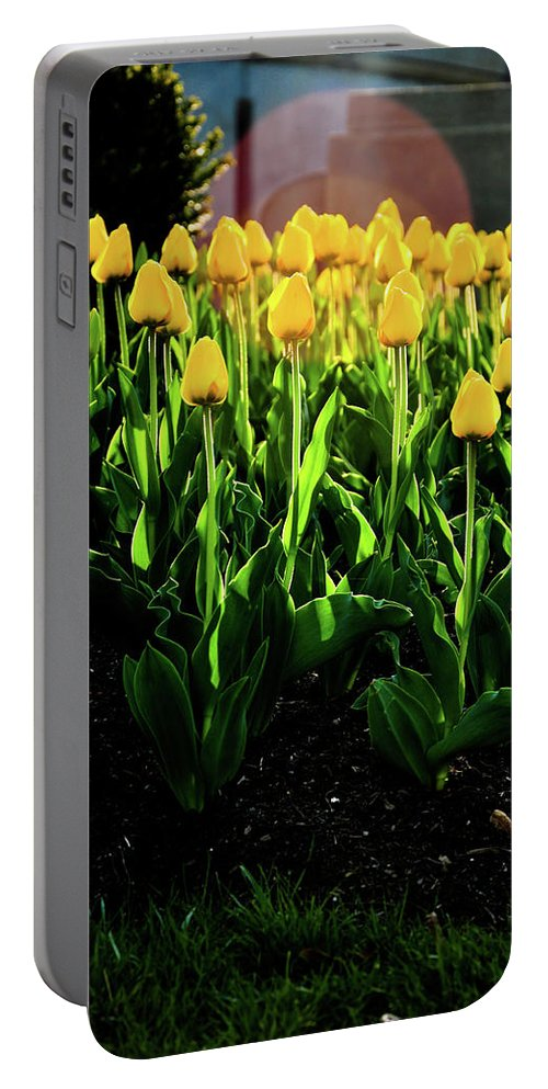 Tulips Portable Battery Charger featuring the photograph Backlit Tulips by Scott Sawyer
