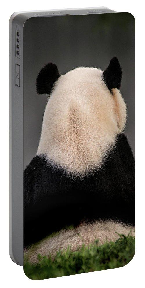 Panda Portable Battery Charger featuring the photograph Backward Panda by Don Johnson