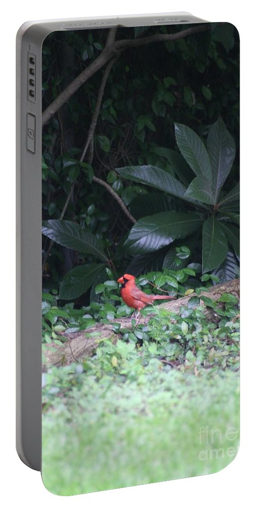 Red Portable Battery Charger featuring the photograph Backyard Friend by John W Smith III