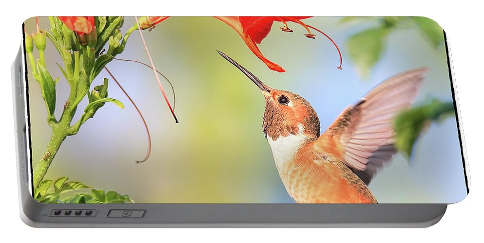 Hummingbird Portable Battery Charger featuring the photograph Backyard Hummingbird Series # 54 by Edita De Lima