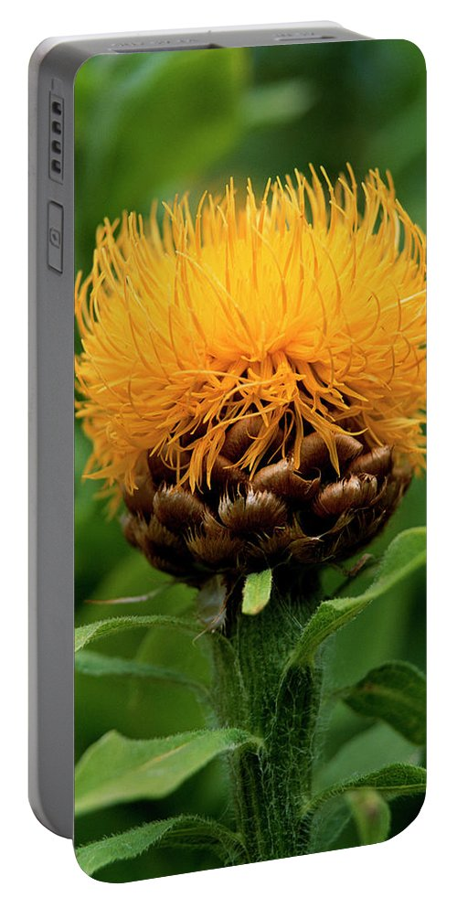 Photography Portable Battery Charger featuring the photograph Bad Hair Day by Jim Benest