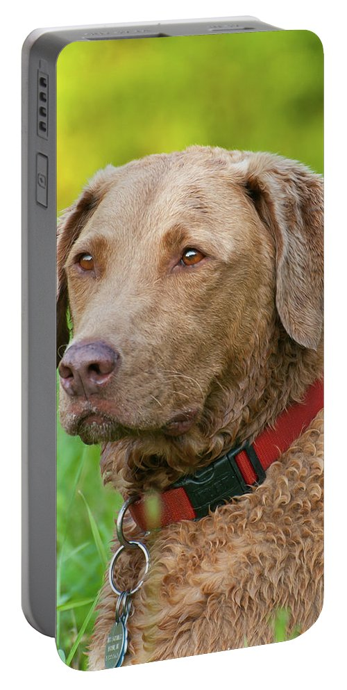 Animals Portable Battery Charger featuring the photograph Bailee 1149 by Guy Whiteley