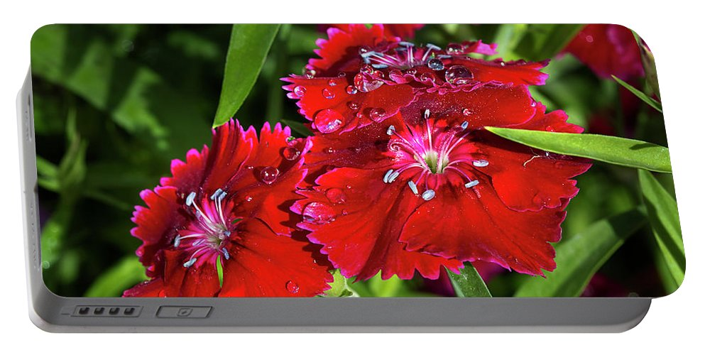 Dianthus Portable Battery Charger featuring the photograph Balancing Raindrops by Phyllis Denton