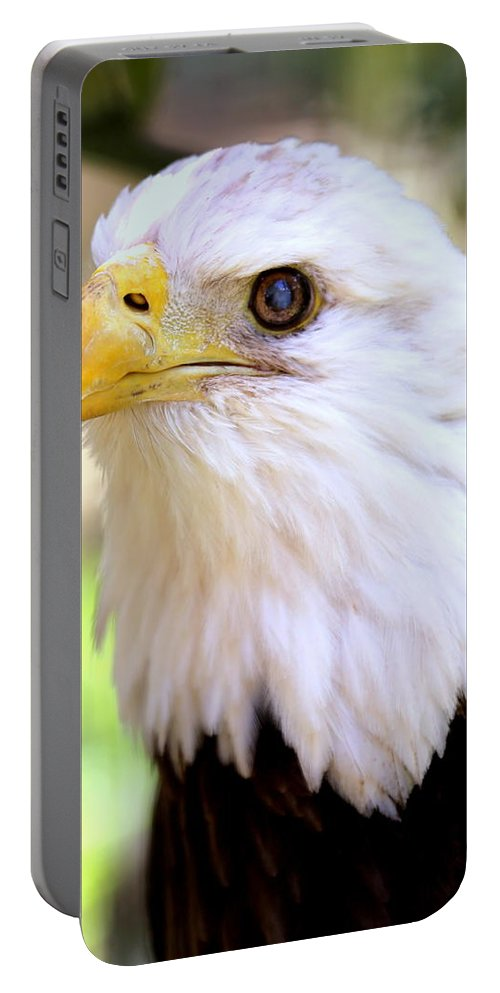 Bald Eagle Portable Battery Charger featuring the photograph Bald Eagle 1 by Imagery-at- Work