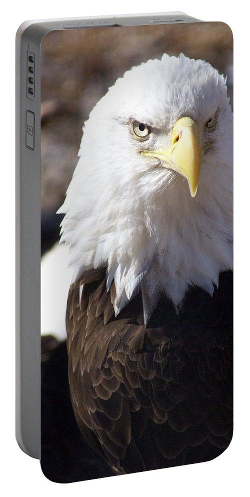 Birds Portable Battery Charger featuring the photograph Bald Eagle 1 by Marty Koch