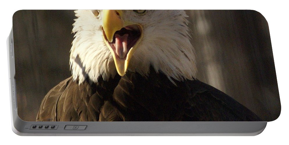 Birds Portable Battery Charger featuring the photograph Bald Eagle 4 by Marty Koch