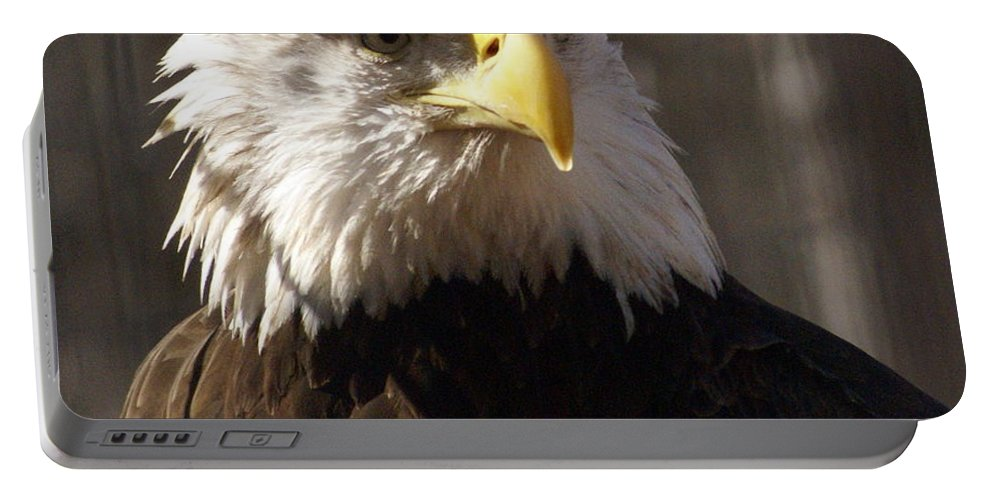 Birds Portable Battery Charger featuring the photograph Bald Eagle 5 by Marty Koch