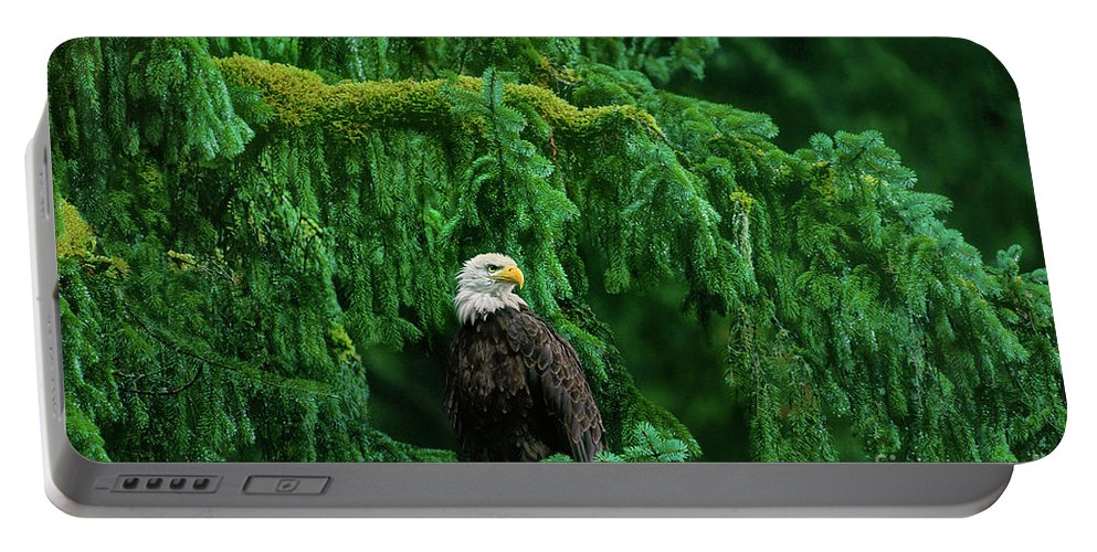 Bald Eagle Portable Battery Charger featuring the photograph Bald Eagle In Temperate Rainforest Alaska Endangered Species by Dave Welling