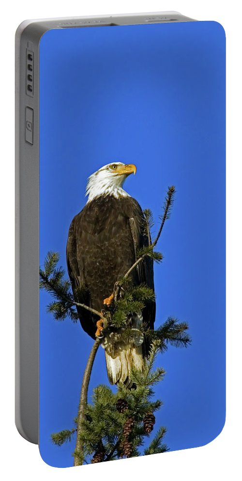 Bald Eagle Portable Battery Charger featuring the photograph Bald Eagle On Blue by Randall Ingalls