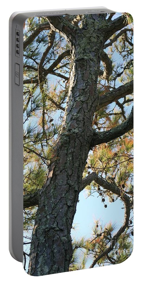 Tree Portable Battery Charger featuring the photograph Bald Head Tree by Nadine Rippelmeyer
