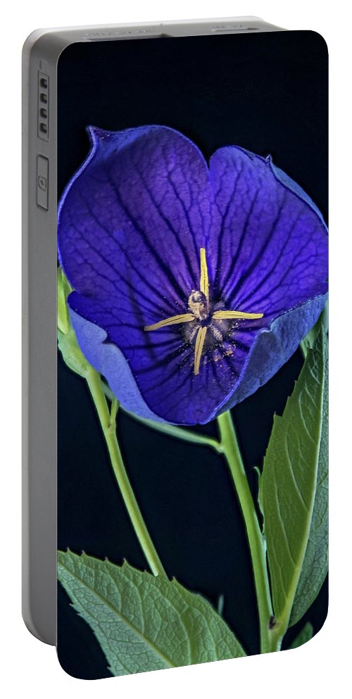 Balloon Portable Battery Charger featuring the photograph Baloon Flower In Early Morning by Douglas Barnett
