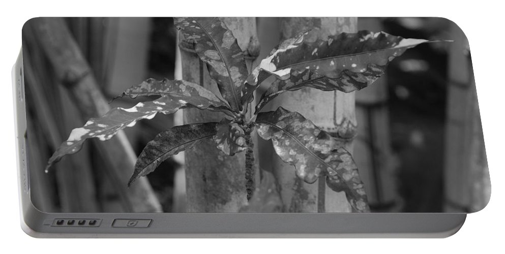Macro Portable Battery Charger featuring the photograph Bamboo Flower by Rob Hans