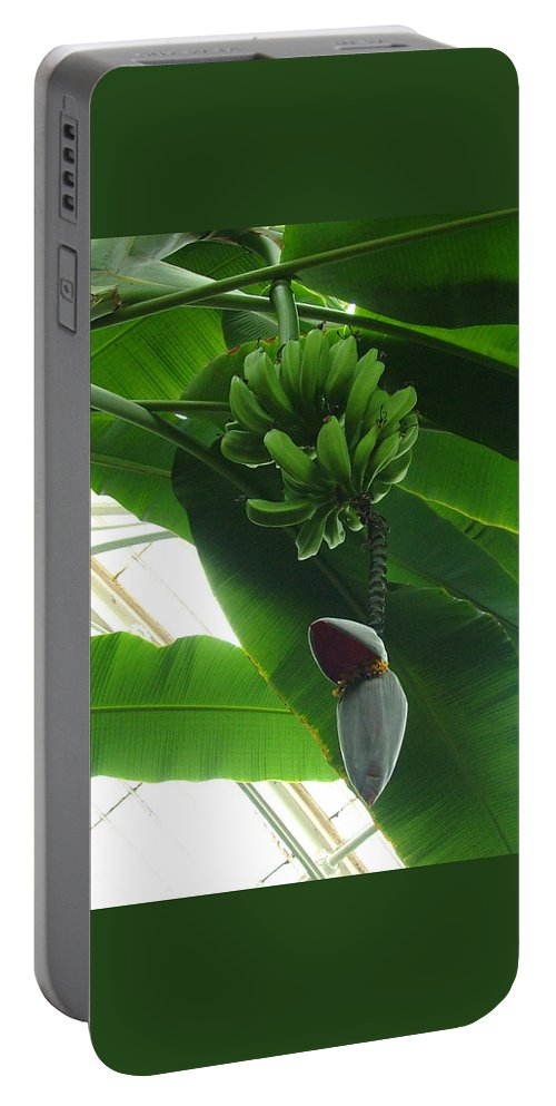 Kew Portable Battery Charger featuring the photograph Banana Plant Kew London England by Heather Lennox