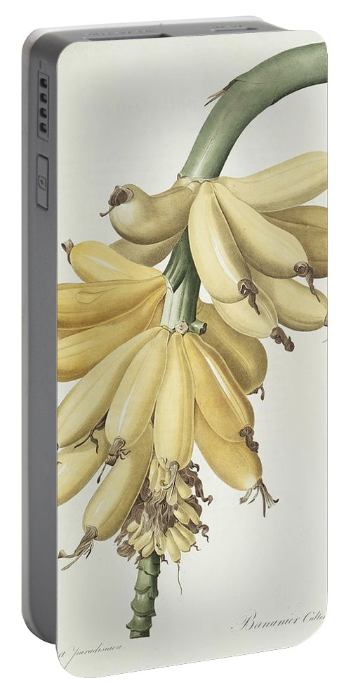 Banana Portable Battery Charger featuring the drawing Bananas by Pierre Joseph Redoute