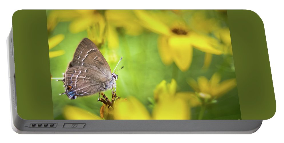 Banded Portable Battery Charger featuring the photograph Banded Hairstreak On Coreopsis by Jeanette Fellows