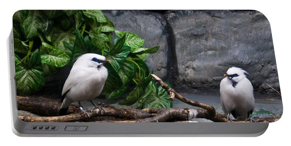 Bandit Portable Battery Charger featuring the photograph Bandit Birds by Douglas Barnett