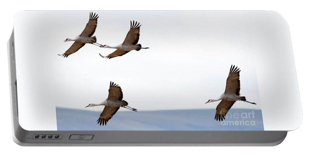 Sandhill Cranes Portable Battery Charger featuring the photograph Bank Right by Mike Dawson