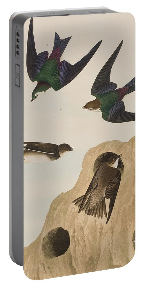 Bank Swallow Portable Battery Charger featuring the painting Bank Swallows by John James Audubon