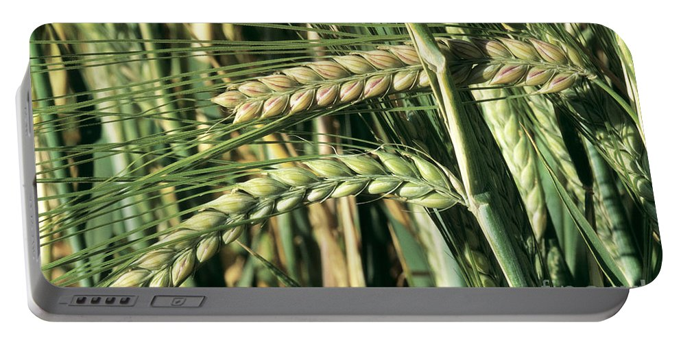 Cereal Portable Battery Charger featuring the photograph Barley, Green Stage by Inga Spence