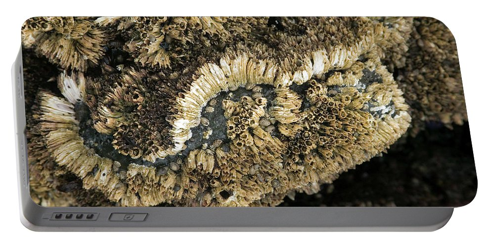 Barnacles Portable Battery Charger featuring the photograph Barnacles At Low Tide by Randall Ingalls