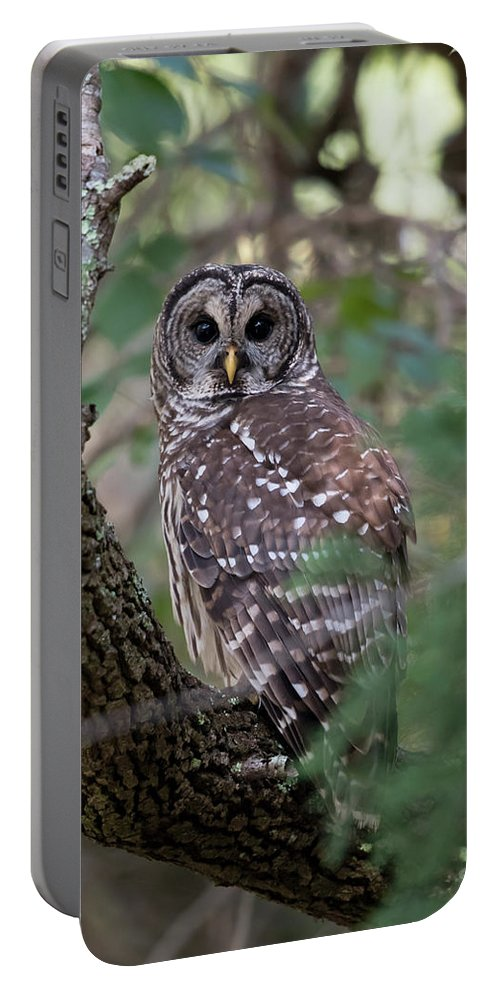 Barred Owl Portable Battery Charger featuring the photograph Barred Owl by George DeCamp