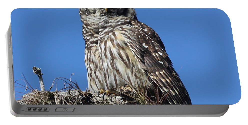 Barred Owl Portable Battery Charger featuring the photograph Barred Owl Portrait by Barbara Bowen