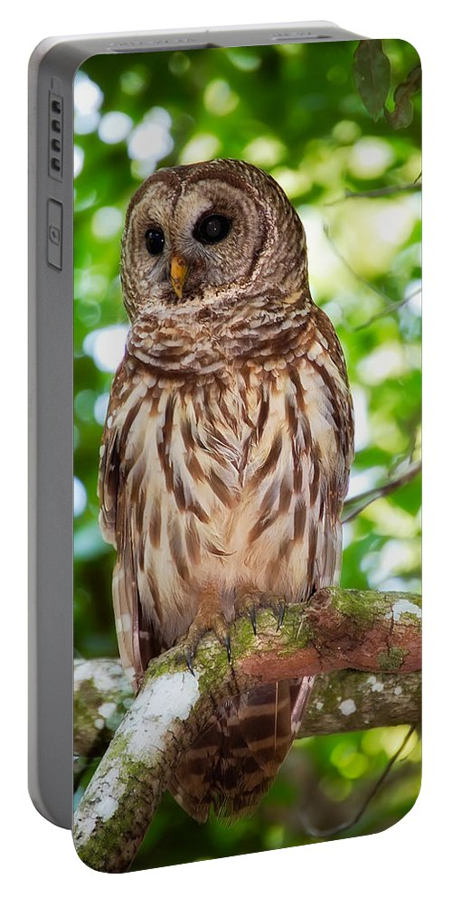Animal Portable Battery Charger featuring the photograph Barred Owl by Rich Leighton