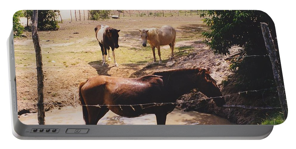 Horses Portable Battery Charger featuring the photograph Bathing Horse by Michelle Powell