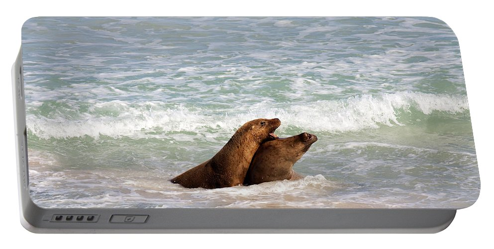 Sea Lion Portable Battery Charger featuring the photograph Battle For The Beach by Mike Dawson