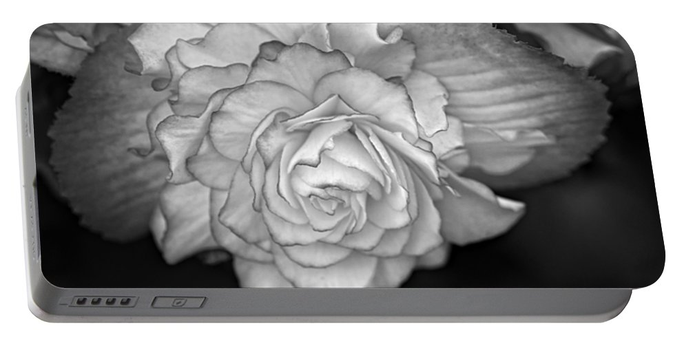Begonia Portable Battery Charger featuring the photograph Be Gentle Bw by Steve Harrington