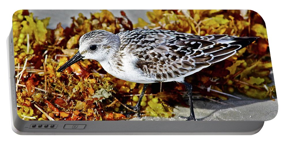 Birds Portable Battery Charger featuring the photograph Beach Buddy by Diana Hatcher