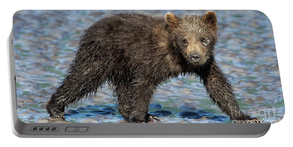 Grizzly Bear Portable Battery Charger featuring the photograph Beach Stroll by Claudia Kuhn