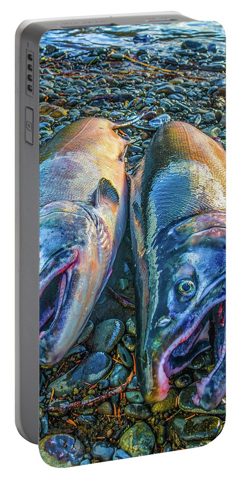 Art Portable Battery Charger featuring the photograph Beached Coho by Jason Brooks