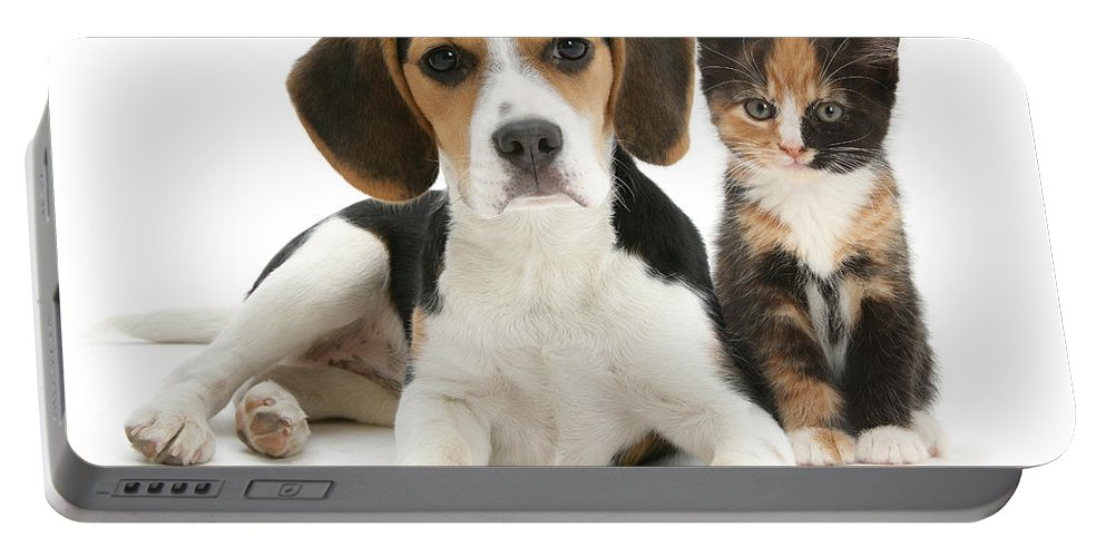 Animal Portable Battery Charger featuring the photograph Beagle And Calico Cat by Mark Taylor