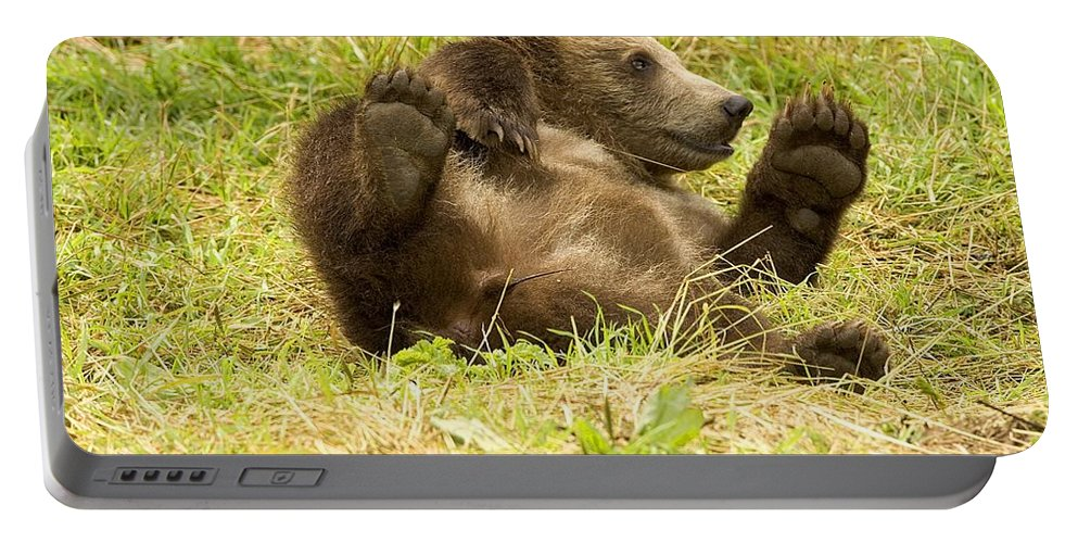 Grizzly Portable Battery Charger featuring the photograph Bear by FL collection