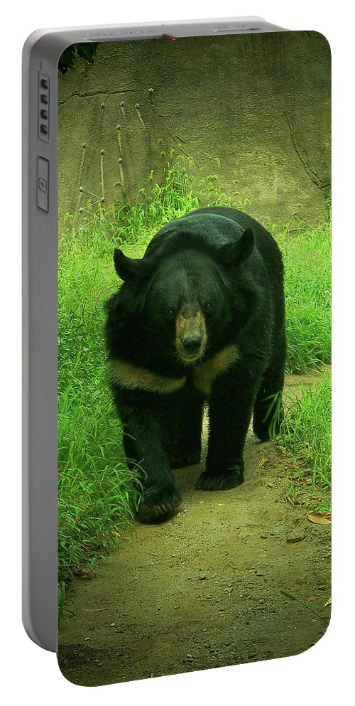 Bear Portable Battery Charger featuring the photograph Bear On The Prowl by Trish Tritz