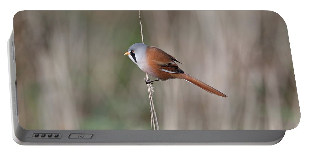 Bearded Portable Battery Charger featuring the photograph Bearded Tit by Peter Walkden
