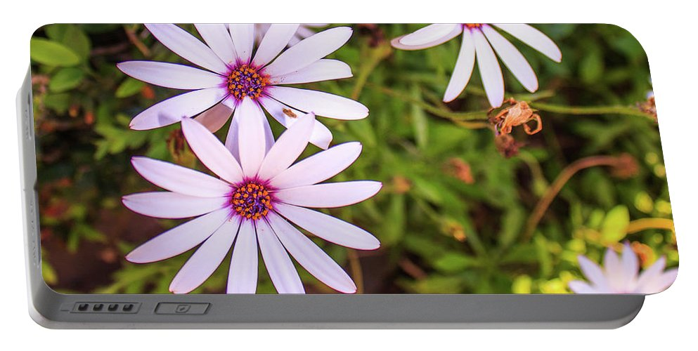 Blossom Portable Battery Charger featuring the photograph Beautiful African White Daisies by Jose Coelho
