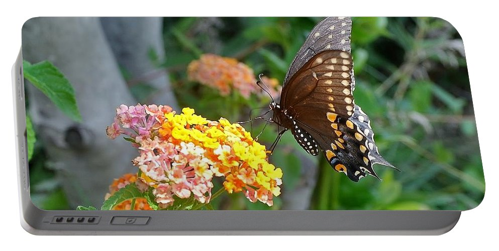 Black Swallowtail Portable Battery Charger featuring the photograph Beautiful Black Swallowtail Butterfly by Kim Bemis