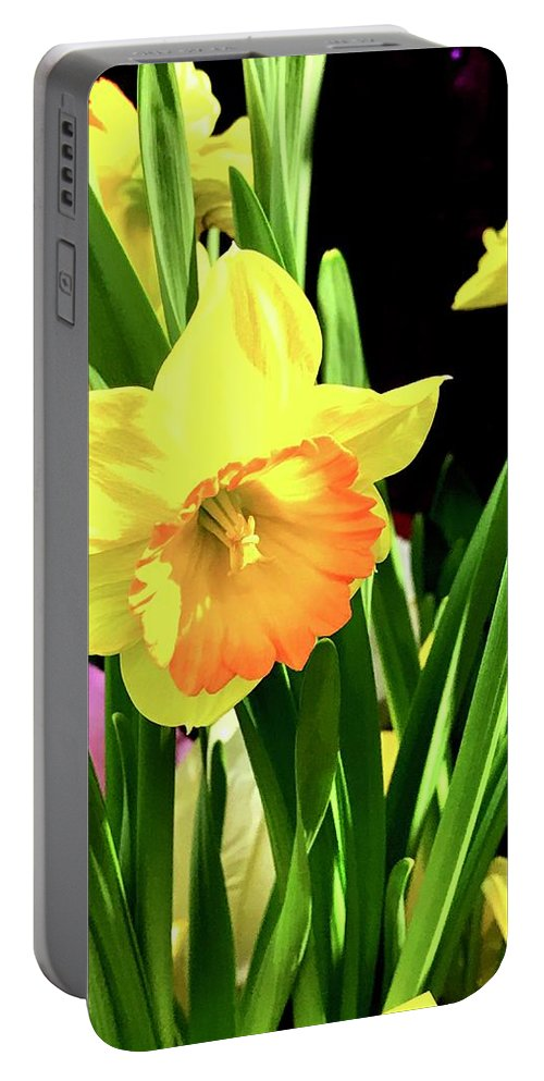 Buttercup Portable Battery Charger featuring the photograph Beautiful Buttercups by JazzyCat Photos