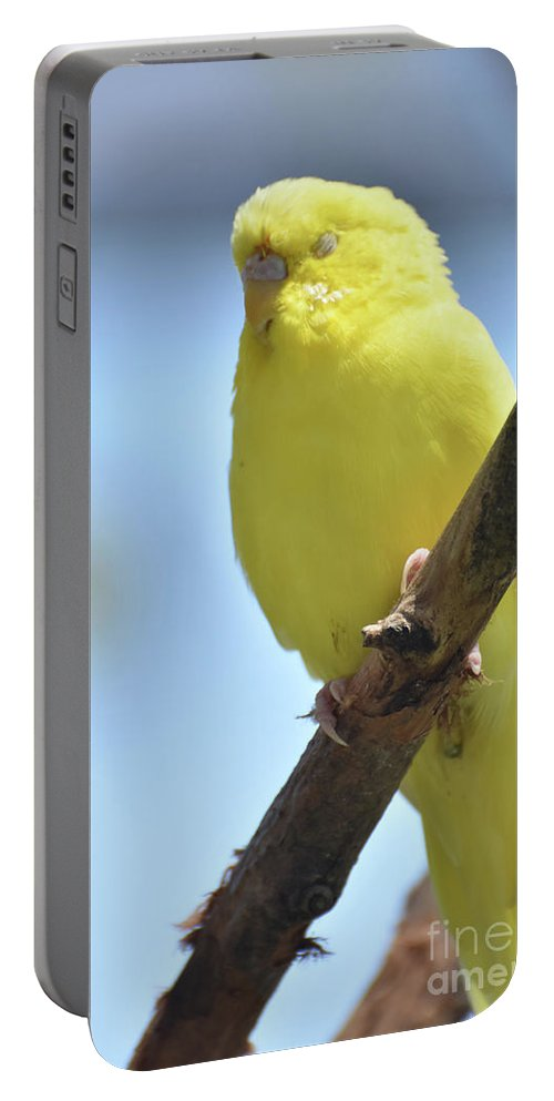 Budgie Portable Battery Charger featuring the photograph Beautiful Face Of A Yellow Budgie Bird by DejaVu Designs