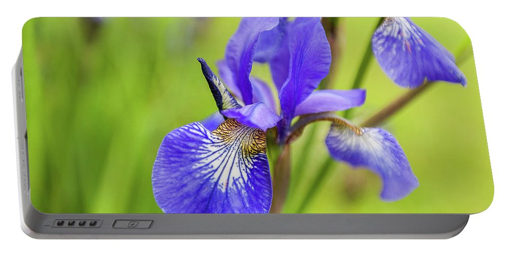 Anna Matveeva Portable Battery Charger featuring the photograph Beautiful Flower Iris by Anna Matveeva