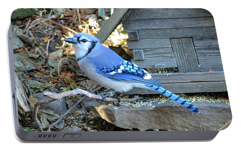 Birds Portable Battery Charger featuring the photograph Beautiful Jay by Shelley Smith