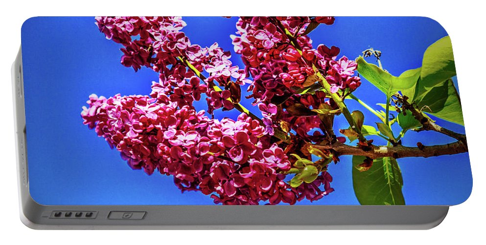 Lilac Portable Battery Charger featuring the photograph Beautiful Lilac by Robert Bales