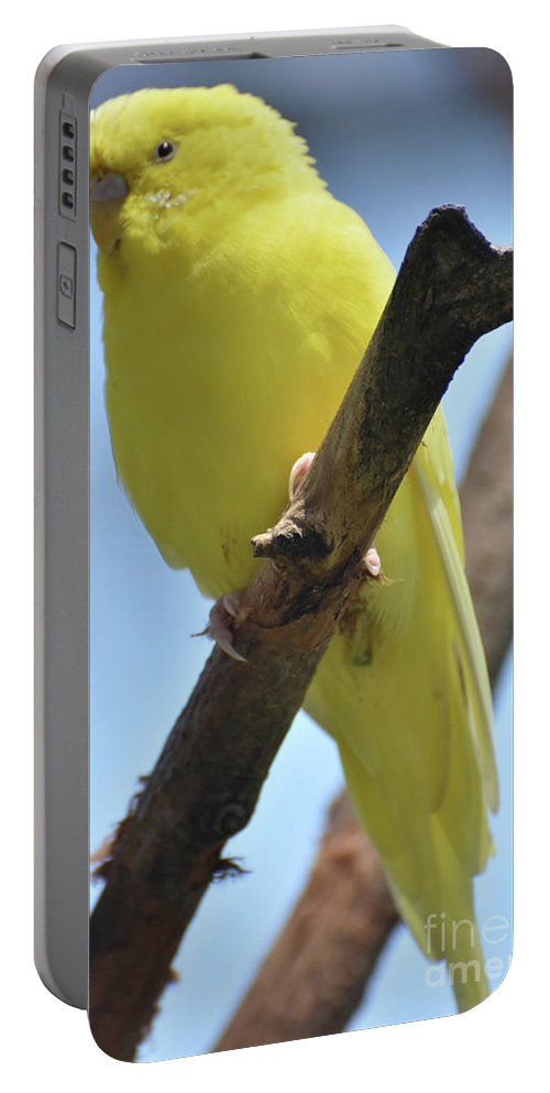 Budgie Portable Battery Charger featuring the photograph Beautiful Little Yellow Budgie Bird In Nature by DejaVu Designs