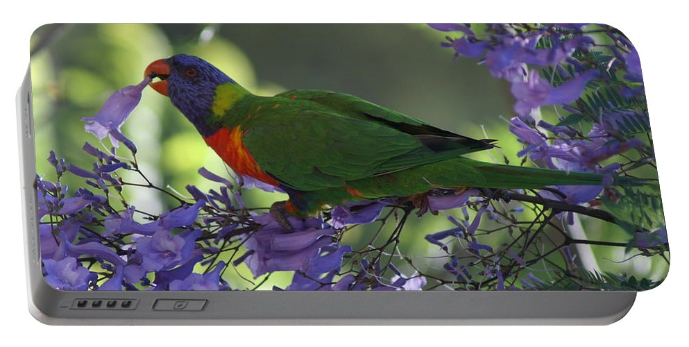 Parrot Portable Battery Charger featuring the photograph Beautiful Lorikeet by Brian Leverton