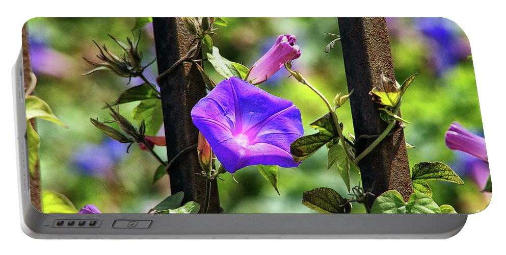 Railroad Vine Flower Portable Battery Charger featuring the photograph Beautiful Railroad Vine Flower II by Mariola Bitner