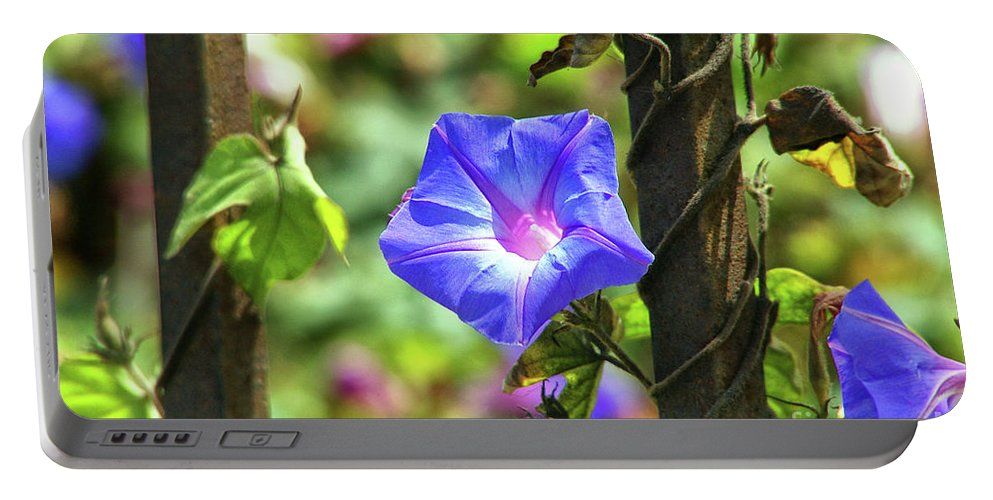 Beautiful Radiating Vine Flower Portable Battery Charger featuring the photograph Beautiful Railroad Vine Flower by Mariola Bitner