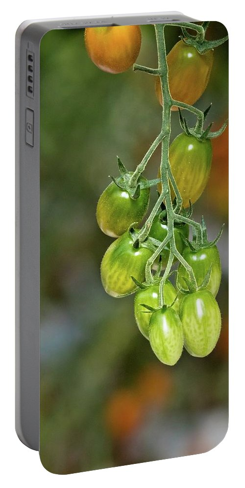Tomatoes Portable Battery Charger featuring the photograph Beautiful Tomatoes by Linda Unger