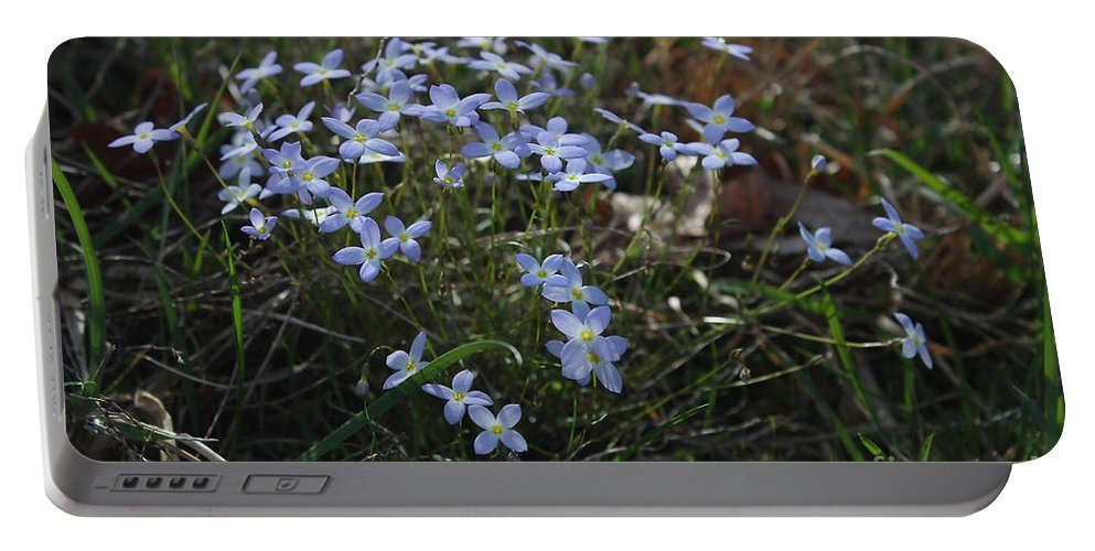 Blue Flowers Portable Battery Charger featuring the photograph Beauty Blue Flowers by Luv Photography